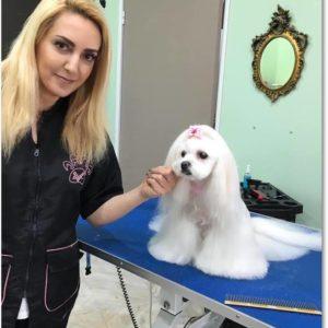 dog_grooming_glyfada_059